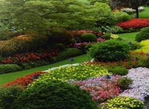 metiersdupaysage.fr realisation achevee parc paysager azalee millepertuis erable du japon prunus